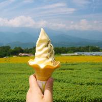 ひまわりソフトクリーム